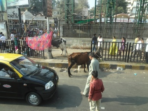 The streets of Mumbai are not for the faint of heart! Cars, livestock, and people all share the road.