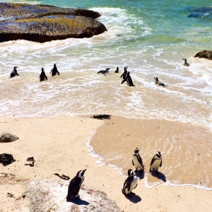 Frolicking Penguins
