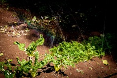 Mist Irrigation